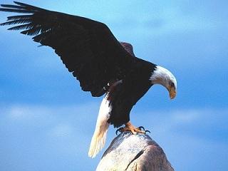 داستان عقاب - مدیریت تغییر در سازمان